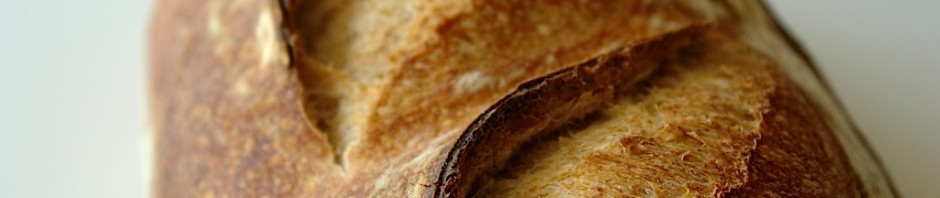 paine alba simpla 02